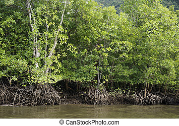 Mangrove Forests in Langkawi Malaysia - Mangrove Forests in...