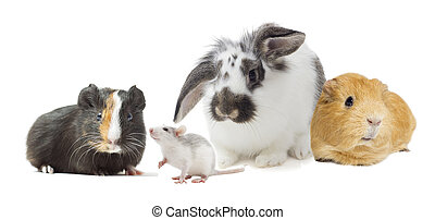 set of rodents