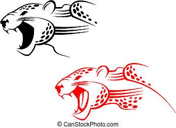 Wildcat, sinal