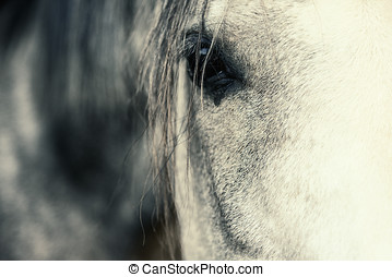 Arabian Horse Eye shallow depth of field