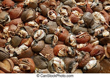 Background texture of Atlantic sea snail meat