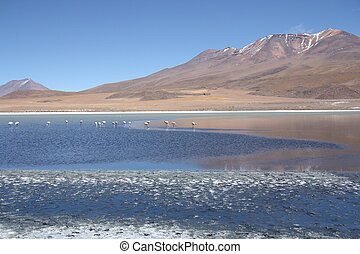 Beautiful lake with flamingos in Bolivian Andes, Uyuni
