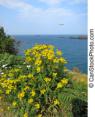 Yellow flowers at the cost of ocean in Brittany, France.