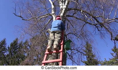 gardener hammering new bird house nesting-box on birch tree...