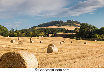 Hay Bales on a Field - Hay bales on fields in the wonderful...