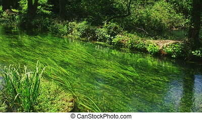 Krka River in forest - Wrist Krka River flowing through the...