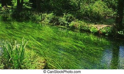 Krka River in forest - Wrist Krka River flowing through the...
