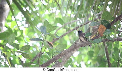 Indian woodpecker perched on tree - Indian woodpecker...