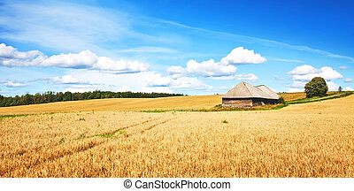 Wheat field, rural landscape