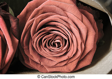 Rose Bouquet Macro - Vintage - Close up macro of a fully...