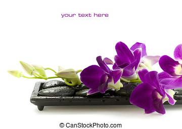 Beautiful purple orchid - Close up of beautiful purple...
