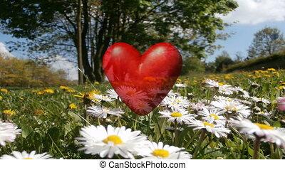 Love heart on meadow 4K UHD video