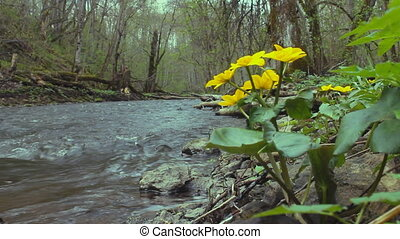 Early spring - On banks of a small river and flowers...