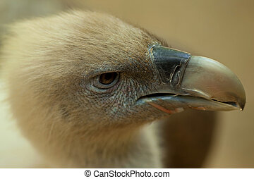 Vulture - Focus on a vulture in a zoo