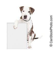 Pit Bull Dog Holding Blank Sign