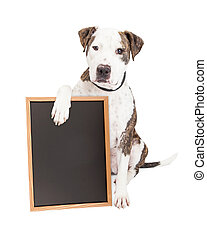 Pit Bull Dog Holding Chalk Board - Cute and friendly Pit...