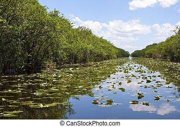 everglades swamp in Florida