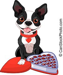 Valentine day Boston terrier - Illustration of Valentine day...