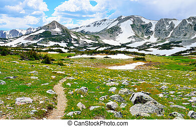 Trail through the alpine meadow with wild flowers in Snowy Range Mountains of  Medicine Bow, Wyoming in summer