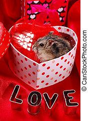 hamster for valentine - little hamster sitting in heart...