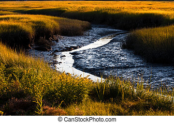 Salt marsh - Beautiful view of a salt marsh at low tide in...