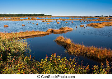 Salt marsh - Salt Marsh at sunset in Scarborough, Maine