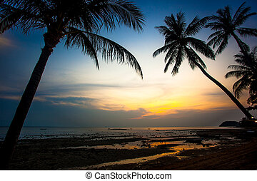 Palm trees sunset on Koh Samui beach Thailand