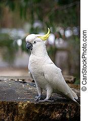 Amazing portrait of cockatoo