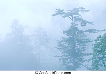deep fog in natural woodland.