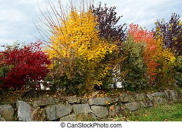 Ornamental shrub hedge - herbstliche Zierstraeucher als...