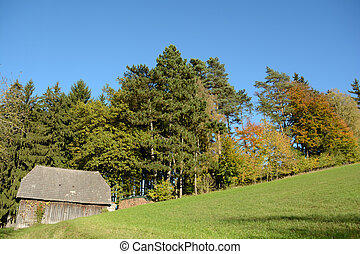 autumn forest with wooden hut - leuchtender Waldrand an...
