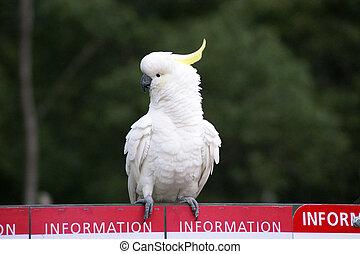 perroquet, panneau affichage