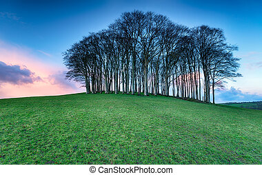Cookworthy Knapp - A small copse of Beech trees on a hill...