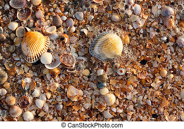 sea shell texture - nature series: sea shell background with...