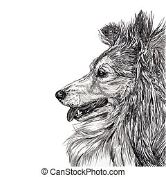 Sketch of Siberian dog