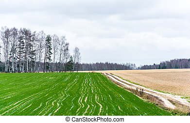 Plowed fields - One field to the green shoots of winter...