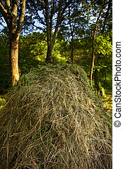 Haystack and trees in a garden