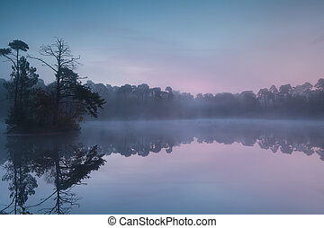 serene sunrise on forest lake, North Braband, Netherlands
