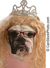 funny english bulldog dressed up as ugly princess with blond wig and tiara