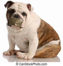 barking dog problems - english bulldog with tape on mouth