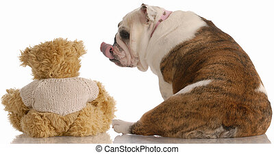 english bulldog reaching out and kissing a teddy bear