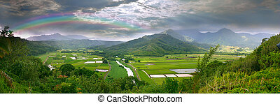 Panorama of the Taro Fields in Kauai Hawaii - Panoramic...