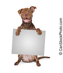Pit Bull Cross Holding Blank Sign - Five month old Pit Bull...