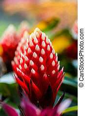 beautyful Bromeliad flower