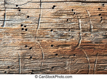 Rotten wood with holes the made larvae of bugs - Surface of...