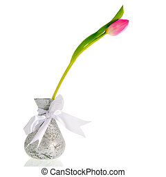 Single tulip - single tulip in silver vase isolated over...