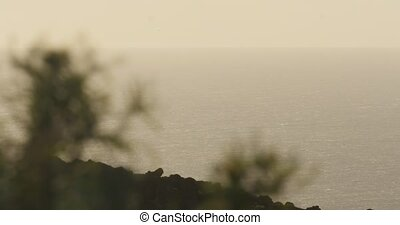 4K, View on open sea through weed, La Palma, native camera...