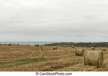 corn sheaves and sea, near Eastbourne