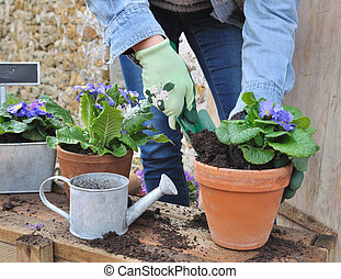 potting flowers - woman doing the flower potting outside