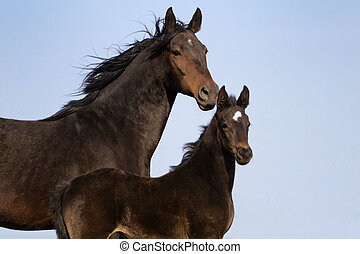 Mare with colt portrait - Mare and her foal in the farm...